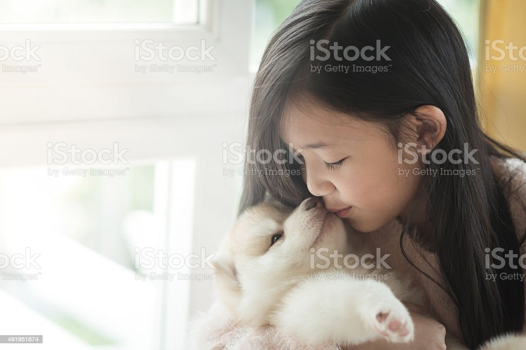 Little asian girl kissing a siberian husky puppy stock photo
