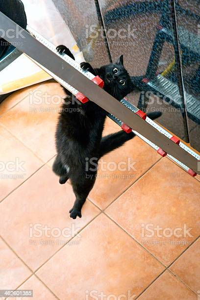 Little assistant falling from ladder picture id462601385?b=1&k=6&m=462601385&s=612x612&h=as 7c1vaxgky8vlf3stiyxbdgbsw8mscov15zn8h5xm=