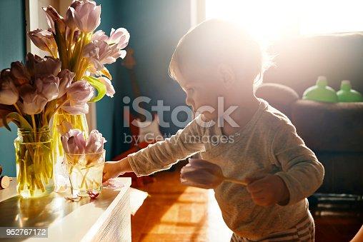 istock little baby biologist 952767172