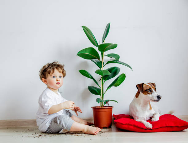 Little baby boy with plant and dog sitting on a floor stock photo