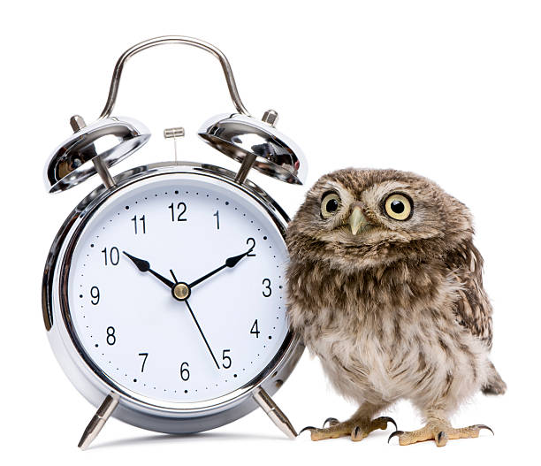 Little baby cute owl and an alarm clock picture id188100318?b=1&k=6&m=188100318&s=612x612&w=0&h=z ovngzkr ntz4x6prdt8hbg4awr5dth6ltsxx5lbo8=