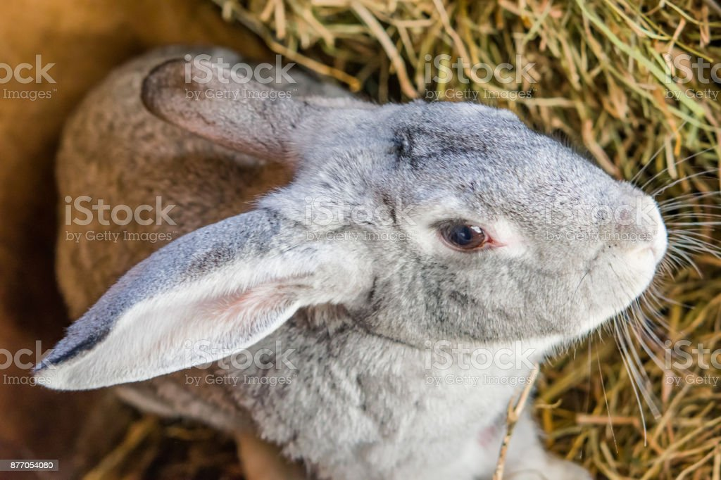 A little baby pet rabbit sits in a cage, close-up