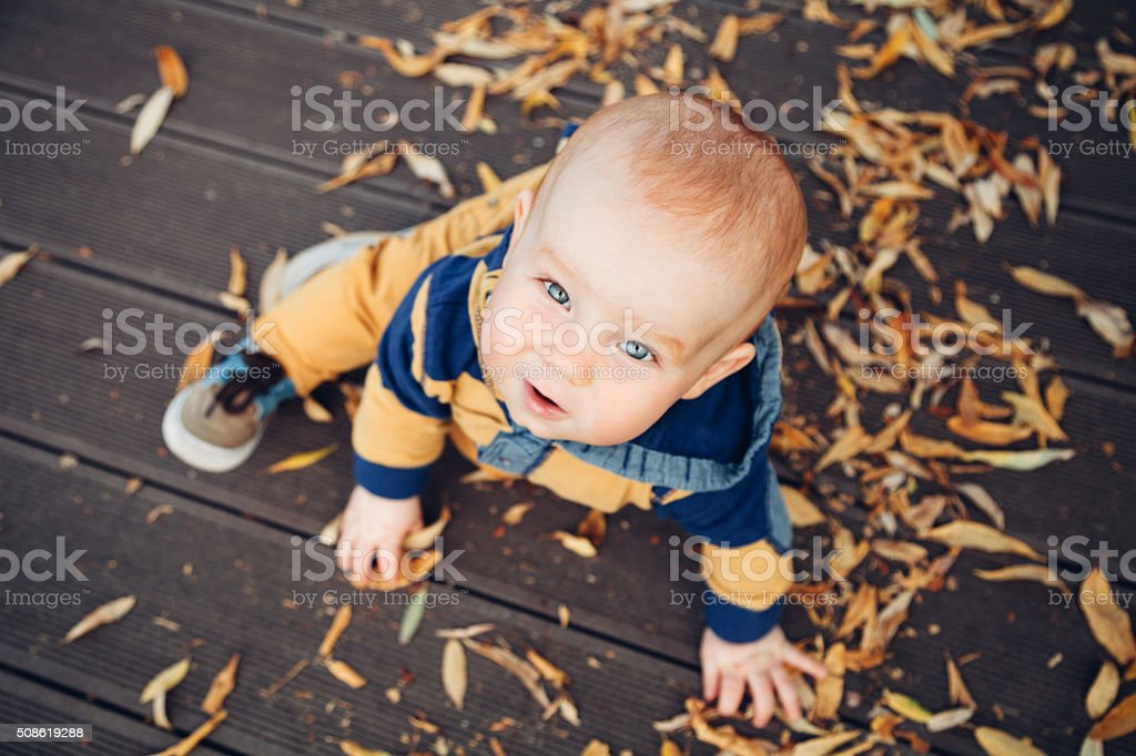 Little baby playing with autumn leaves on a wooden floor stock photo
