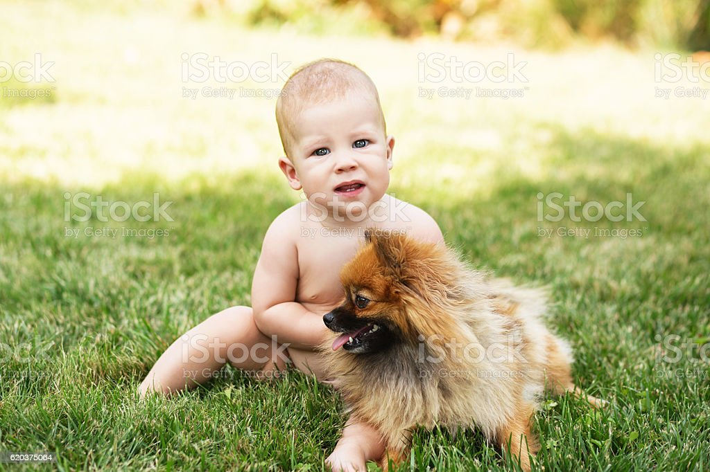 Little baby playing with dog Pomeranian spitz on the grass zbiór zdjęć royalty-free
