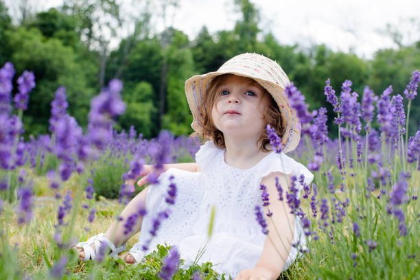 little baby sitting on lavender field stock photo