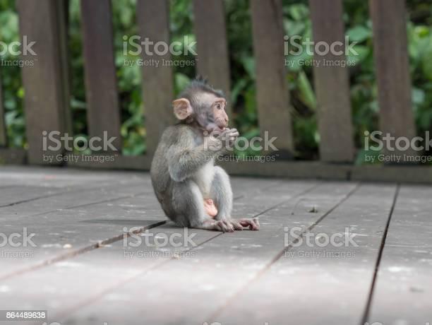 Little babymonkey in monkey forest of ubud bali indonesia picture id864489638?b=1&k=6&m=864489638&s=612x612&h=z3gpswmentwgjustb3rhbd3zwwnweu8jnbss13fscs0=