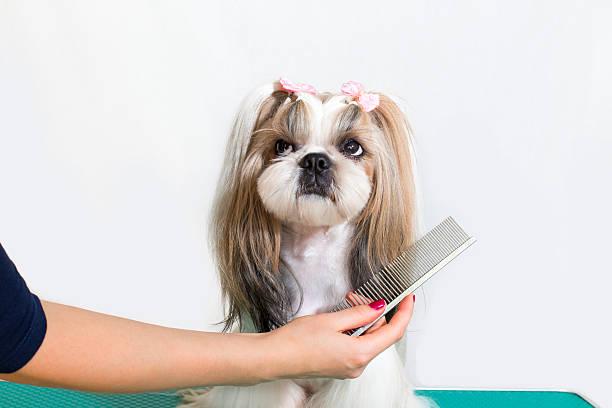 Kleine Schönheit shih-tzu Hunde in der hand groomer – Foto