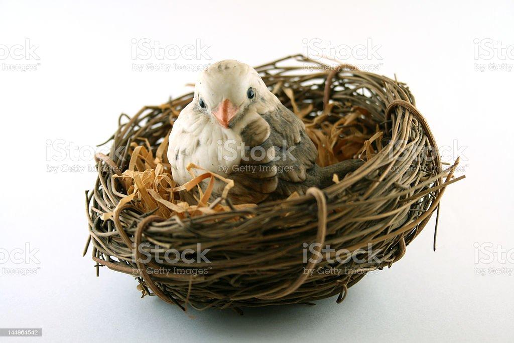 Little Bird in Nest