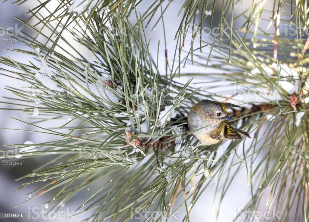 Little bird on the tree stock photo
