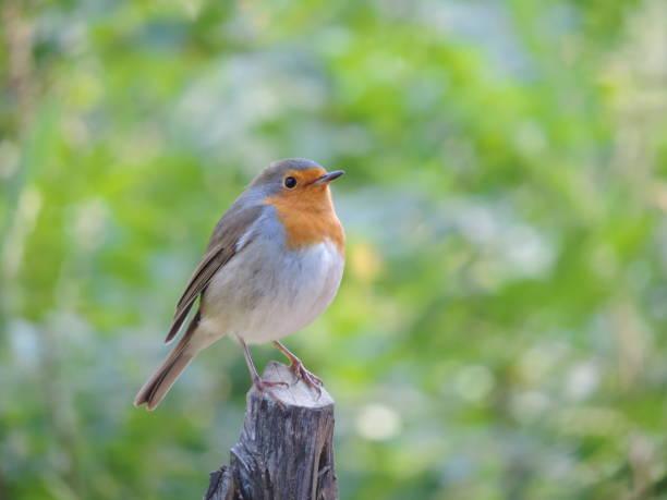 Little Bird - Photo