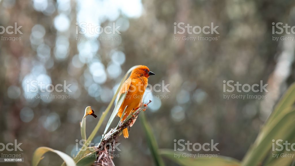 A little bird sits in the green grass. The bird flew to the bran stock photo