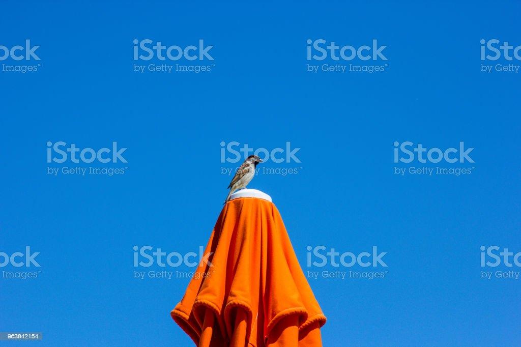 little bird sitting on a beach umbrella - Royalty-free Animal Stock Photo