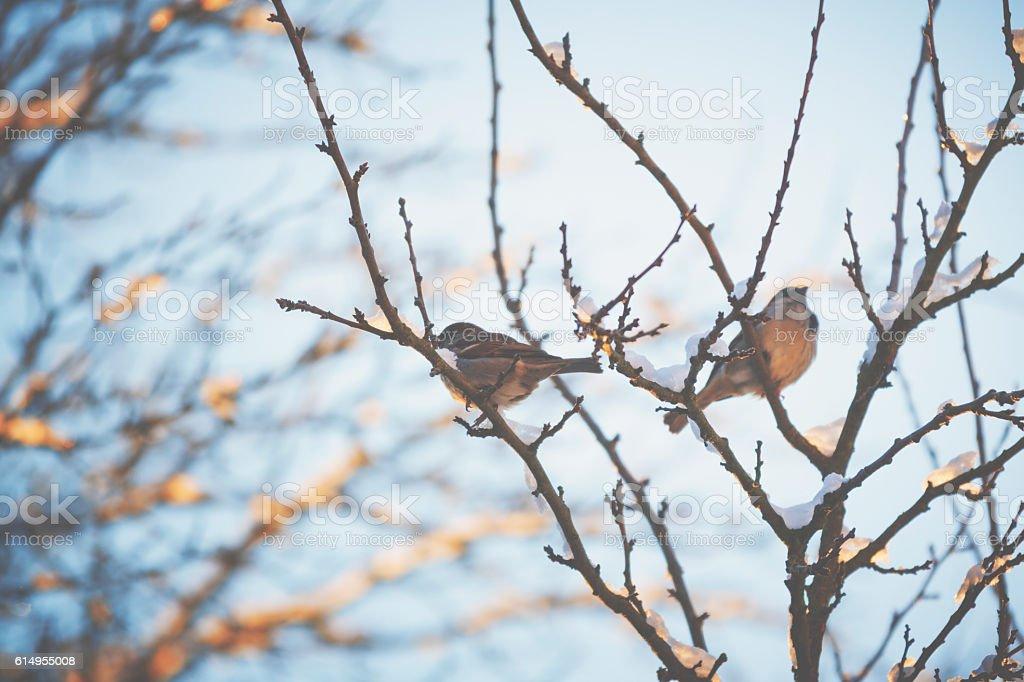 Little bird sitting on a tree in winter foto