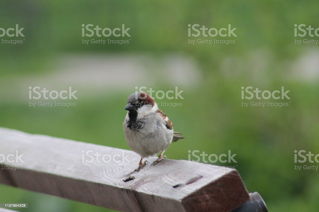 little bird Sparrow close-up. birds and animals in the wild. flora...