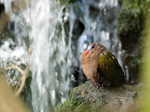 Little bird under waterfall stock photo