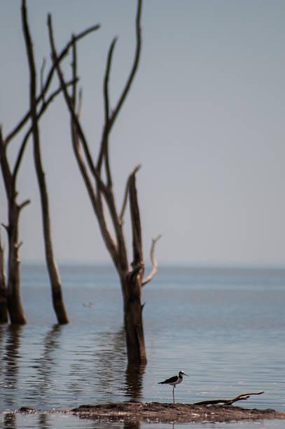 little pájaro fino con las piernas en el mar - foto de stock