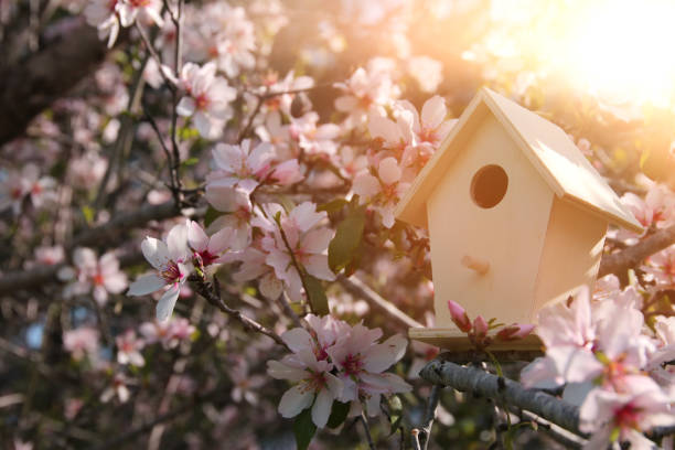 Little birdhouse in spring over blossom cherry tree. stock photo