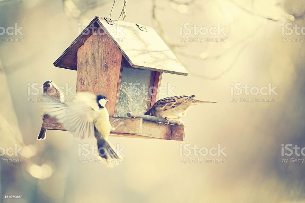 Little birds at the bird house stock photo