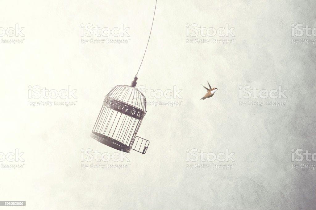 fuga de pequenos pássaros fora da gaiola - Foto de stock de Aberto royalty-free