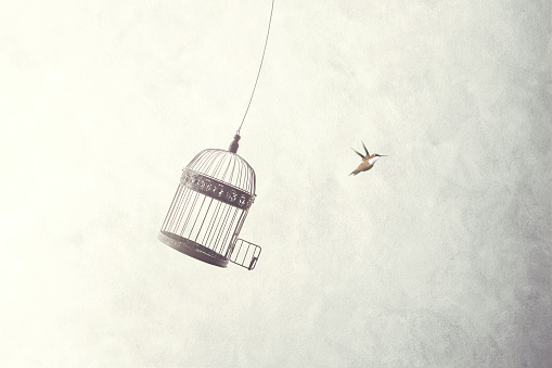istock little birds escape out of birdcage 898680966