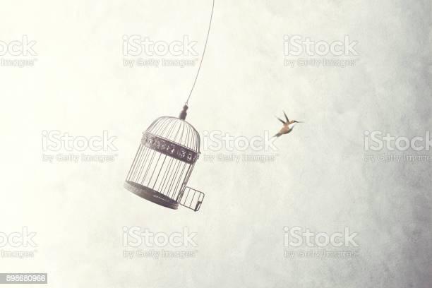 Little birds escape out of birdcage picture id898680966?b=1&k=6&m=898680966&s=612x612&h=apowrjski961nwaefeqiq6ghkohnopudb9km v92220=