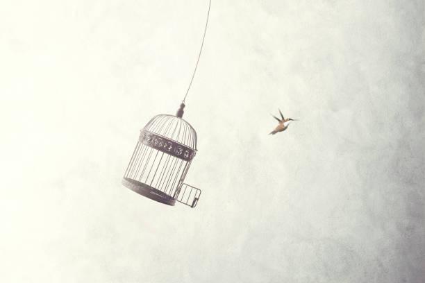 fuga de pequenos pássaros fora da gaiola - escapismo - fotografias e filmes do acervo