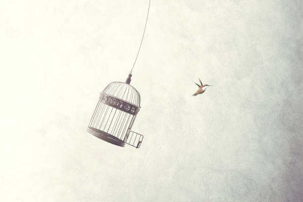 little birds escape out of birdcage stock photo