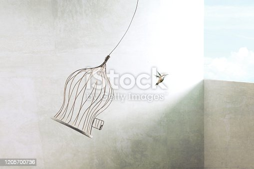 1068588904 istock photo little birds escapes out of birdcage 1205700736