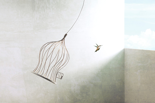 little bird flying out of bird cage, think outside the box