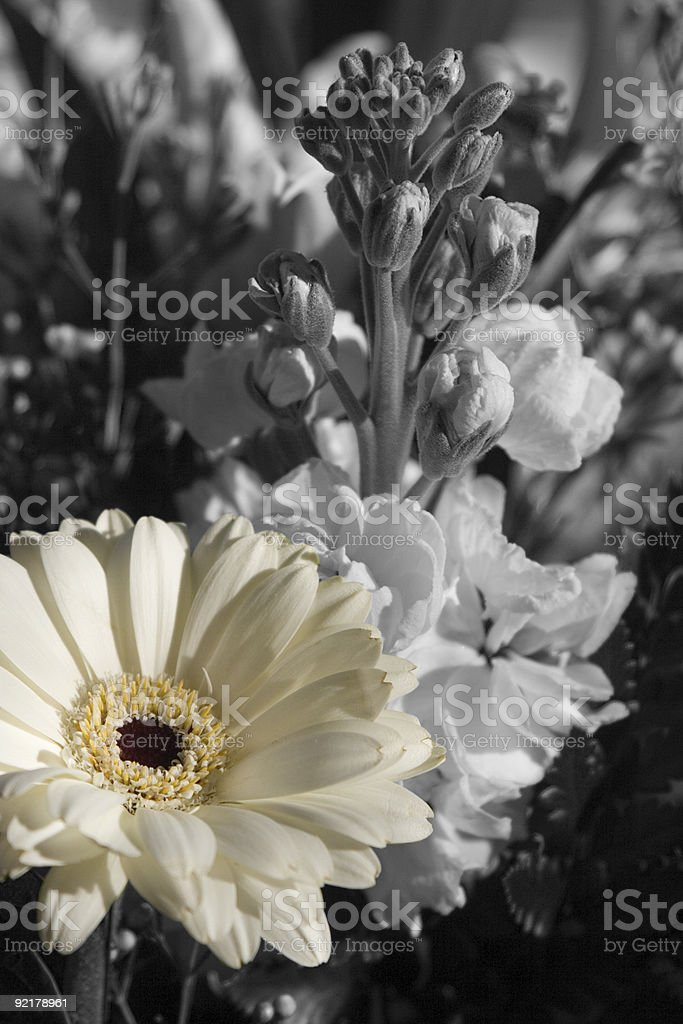 little bit of color royalty-free stock photo