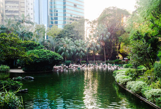 a little bit of nature in the middle of hong kong - kowloon stock-fotos und bilder