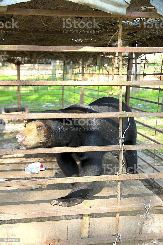 Little Black Bear in Gate stock photo