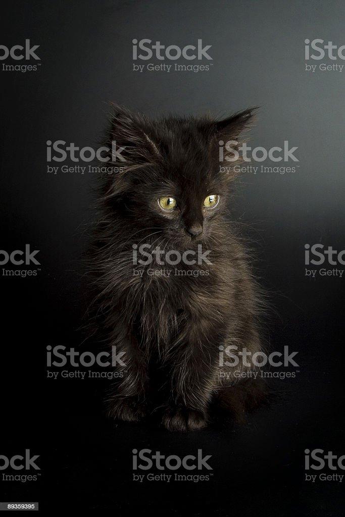 Little black cat royaltyfri bildbanksbilder