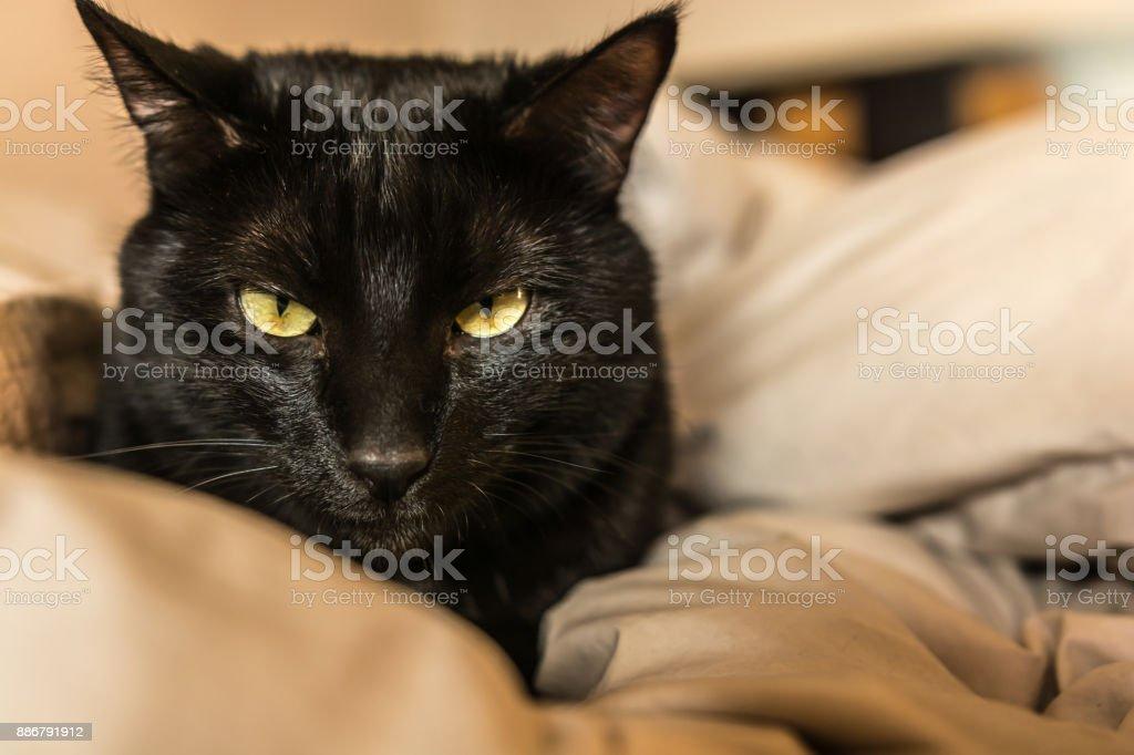 Pequeño gato negro mirándonos de una silla. - foto de stock