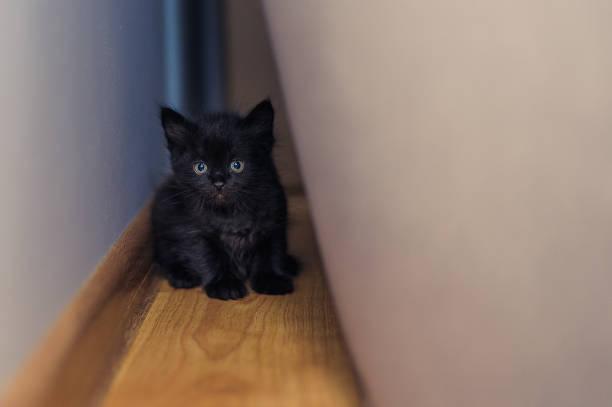 Little black kitten hid behind an armchair picture id1183761768?b=1&k=6&m=1183761768&s=612x612&w=0&h=j2iumnf lknwgjkkvlfgc1ql5lepch1nwtobjijh6ie=