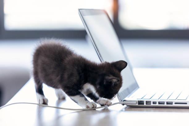 Little black kitten playing with the laptop cable at living room of picture id1186954546?b=1&k=6&m=1186954546&s=612x612&w=0&h=pw0r6thh6hlg545vpoxpgf4ayxjf9v3qakwanm6v7ke=