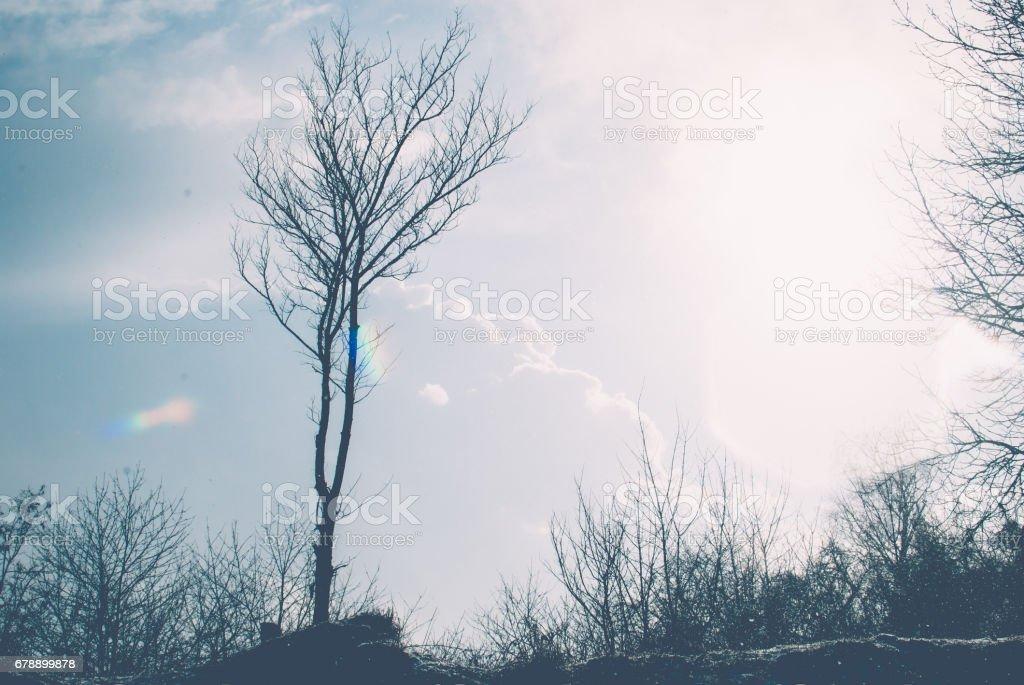 Petit arbre noir vers le ciel bleu et le soleil d'hiver jaune. photo libre de droits