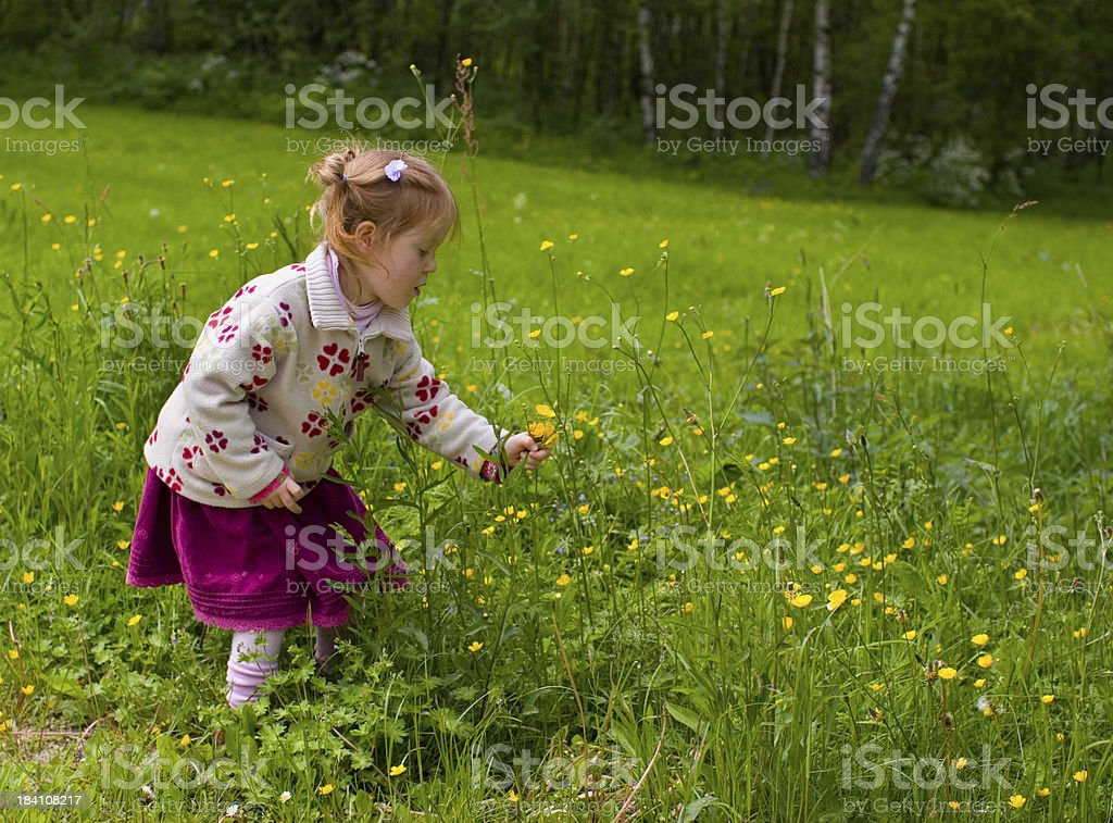"Little blonde girl picking butter-cup flowers ""Little blond 3 year old girl outside, picking butter-cup flowers."" Affectionate Stock Photo"