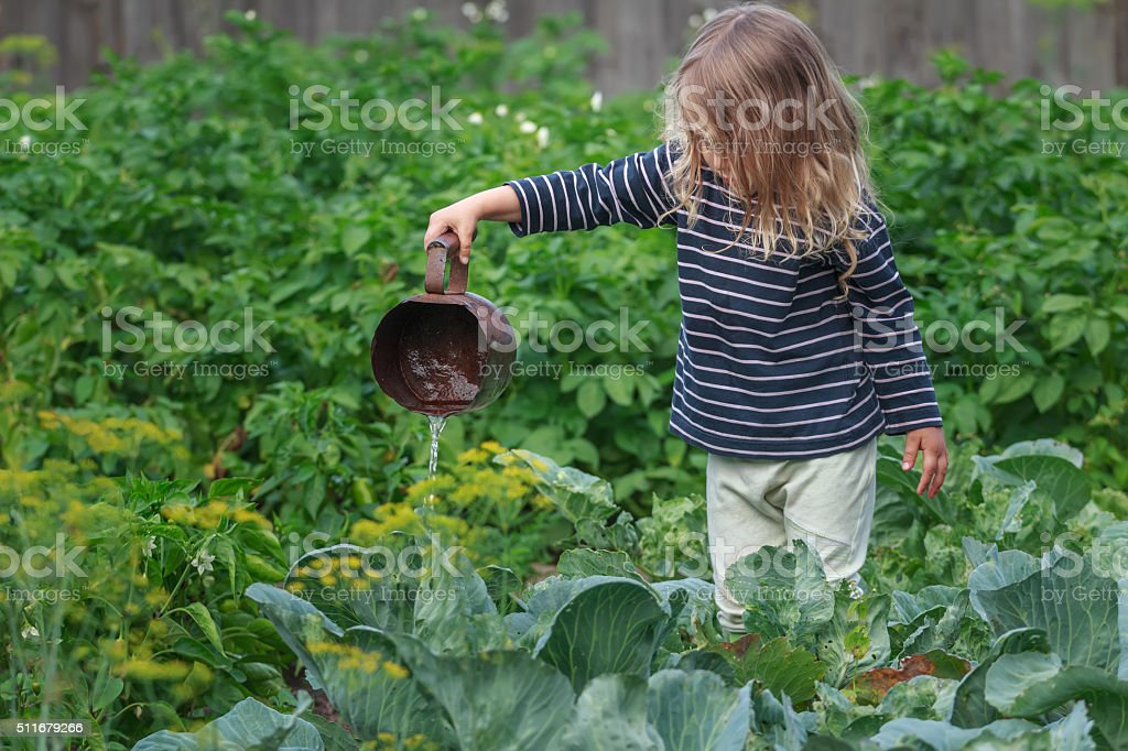 Little blonde girl watering pepper plants on summer garden bed stock photo