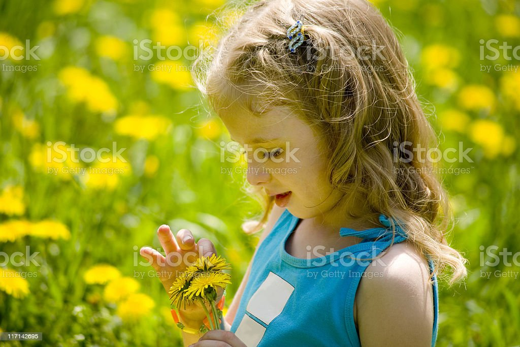 Little blonde looking at dandelions  in the meadow royalty-free stock photo