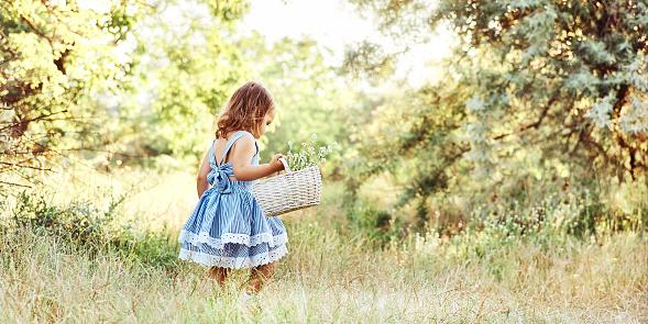 Little blondie girl in white-blue summer dress holding white basket full of field flowers walking on meadow in forest
