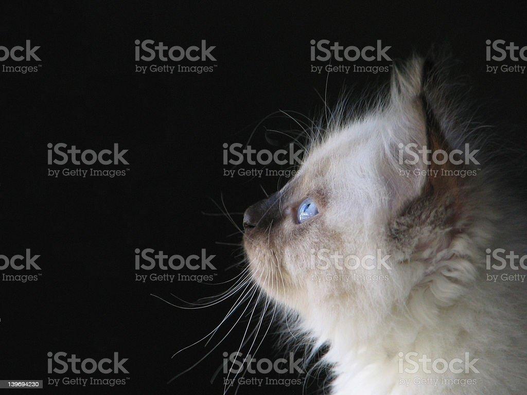 Little Blue Eyes - Profile stock photo