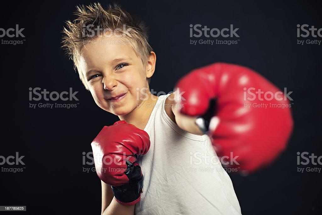 Little boxer stock photo