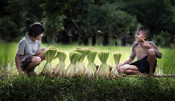 Little boy and girl farmer on green fields stock photo