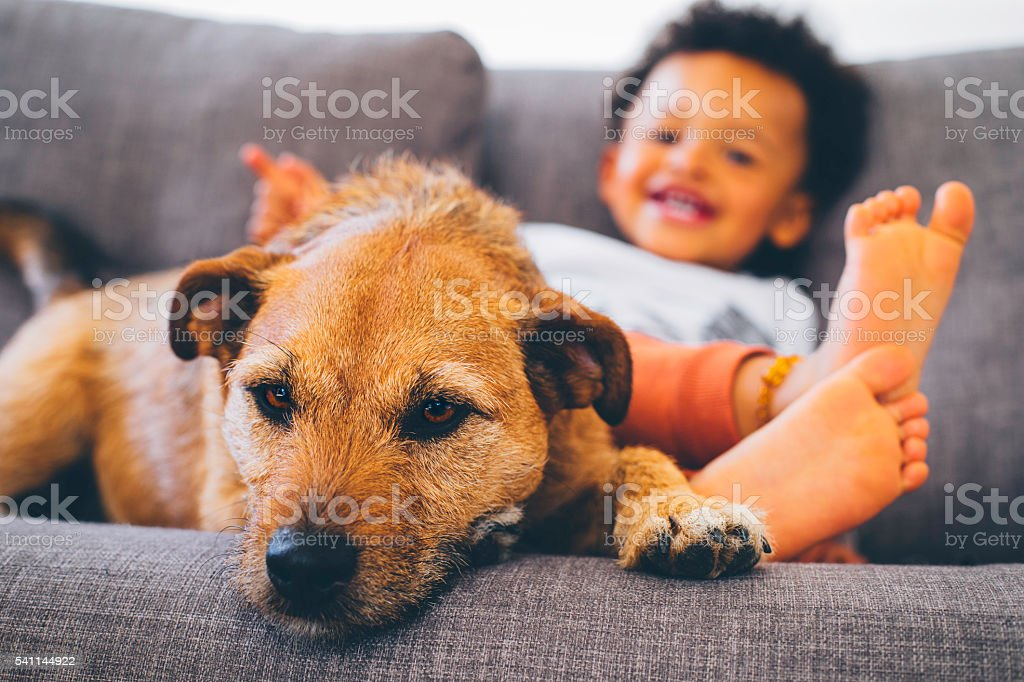 Little boy and his dog relaxing at home stock photo