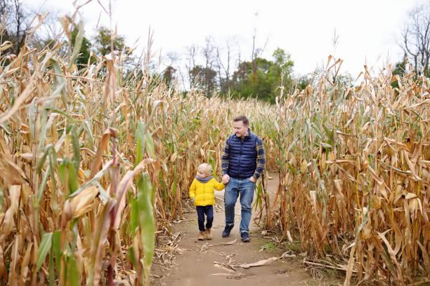 El niño y su padre se divierten en la feria de calabazas en otoño. Familia caminando entre los tallos de maíz seco en un laberinto de maíz. Diversión americana tradicional en feria. - foto de stock