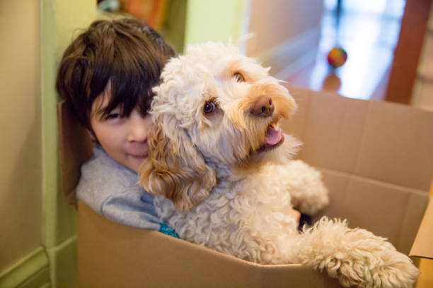 Little boy and Puppy in a box stock photo