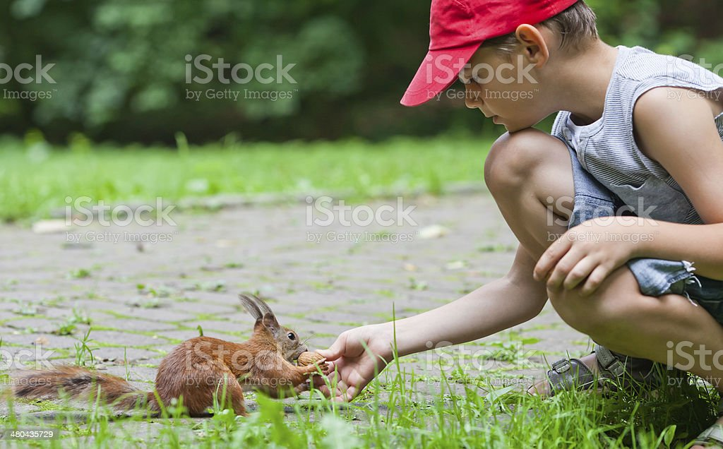 Little boy and squirrel stock photo