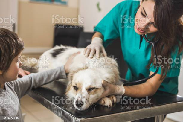 Little boy brought his dog on a medical exam at veterinarians office picture id951027110?b=1&k=6&m=951027110&s=612x612&h=vov9ihz a 4dzozyzst2gffrb1 7o8xvzdd0ucky0dy=