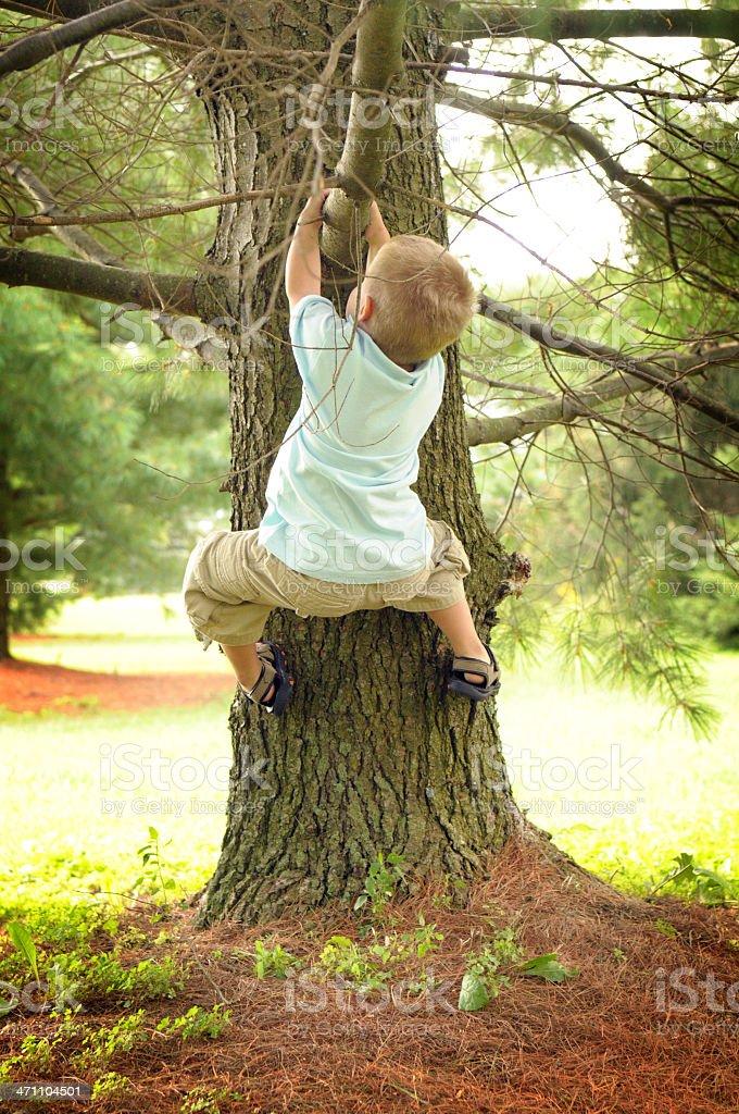 Little Boy Climbing a Tree royalty-free stock photo